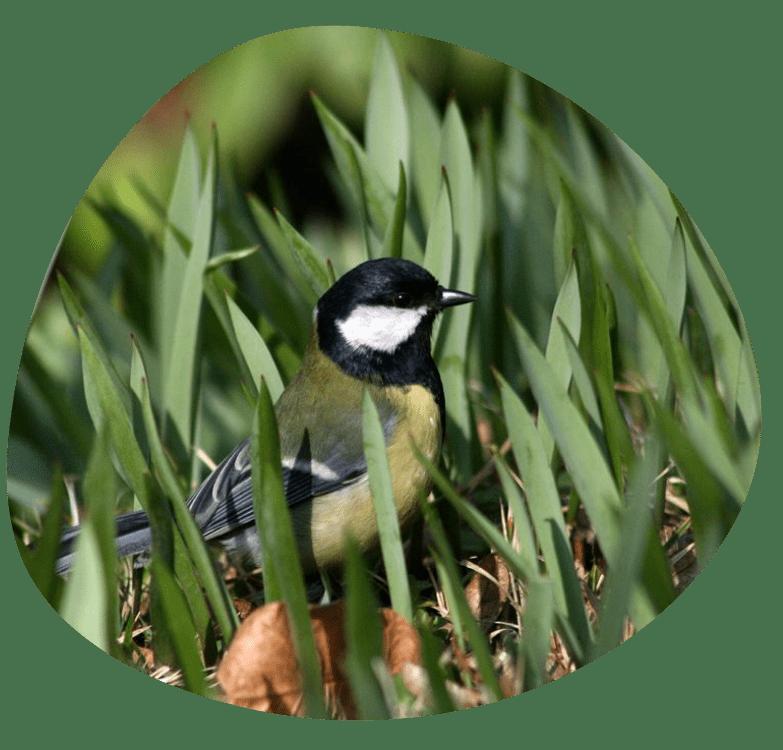 Vitani ptaciho zpevu_783x750