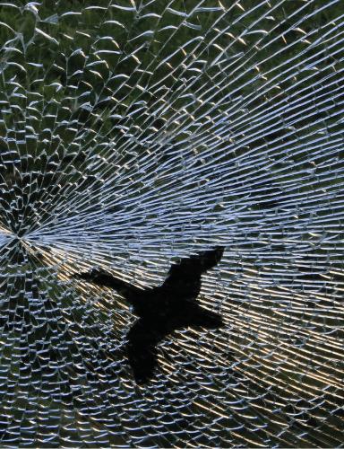 monitoring uhynu ptaku na sklenenych plochach_384x500 px (1)