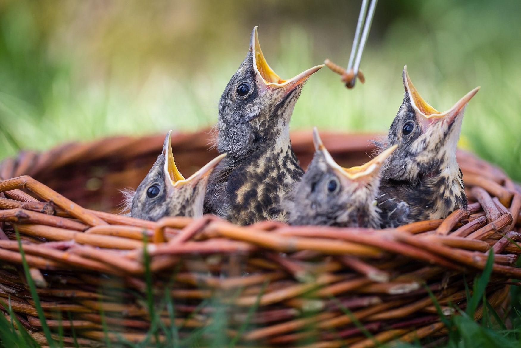 krmeni ptacat - Stanice Pavlov